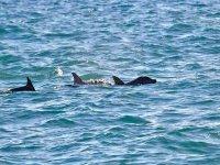 puedes encontrarte con un delfin