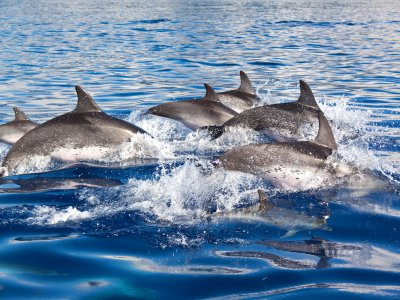 Dolphin-Watching in Mallorca - Adults