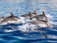 与海豚一起航行
