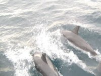 we find a pair of dolphins