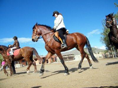 骑马游览富埃特文图拉中等水平2小时