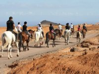 在富埃特文图拉1小时便宜的骑马