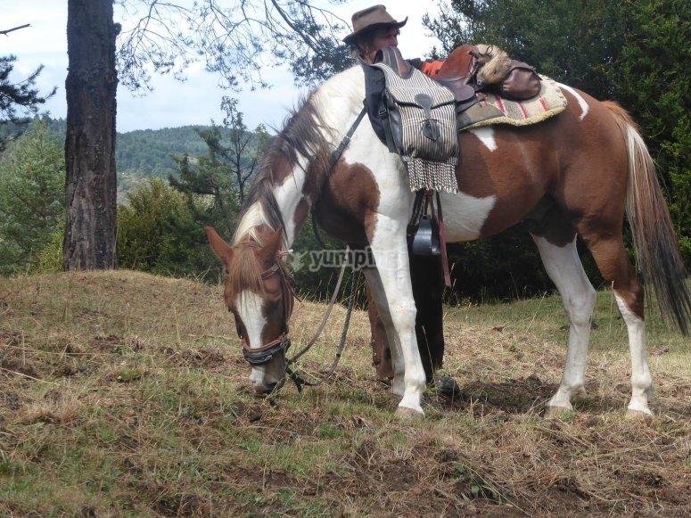 Dia en la naturaleza con caballo