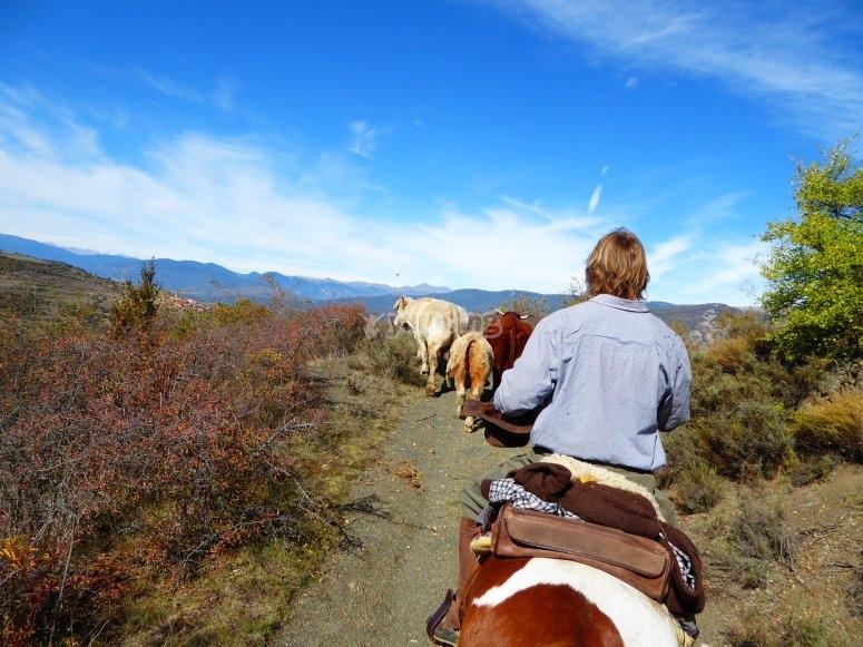 Arreo de vacas en el camino