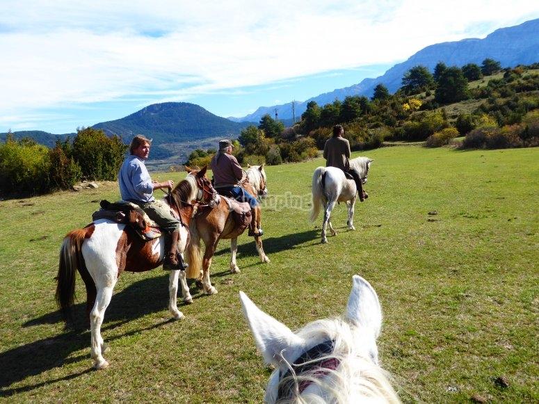 Conexión de grupo y caballos