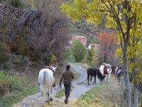 Ruta a caballo con acampada 2 días en Lleida