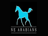 Ne Arabians Rutas a Caballo