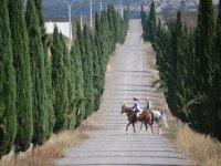 Atravesando el camino sobre los caballos