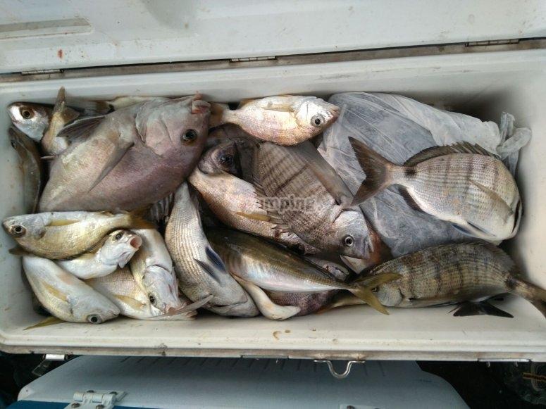 pesca a huelva