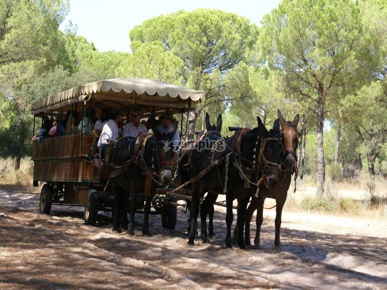 coche caballo camino rociero
