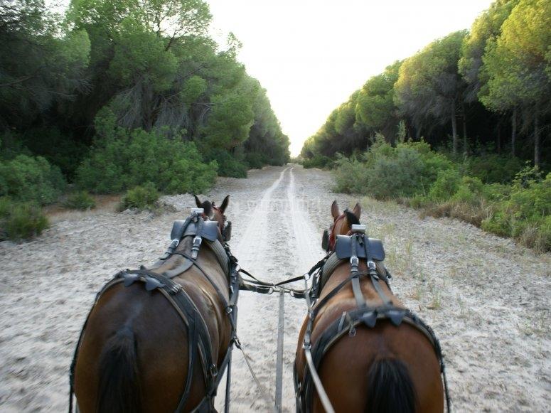 coche caballo sendero doñana