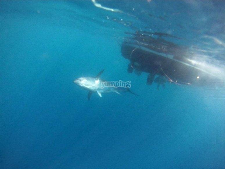 Avistamiento de cetáceos.