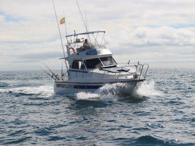 在卡塔赫纳5h捕鱼和瞄准鲸目动物