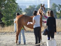Los mejores cuidados para nuestros caballos