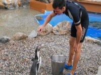 Dando de comer a los pinguinos