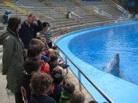 Delfin saludando al publico