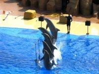 Exhibicion de cetaceos