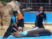 Explicando las caracteristicas de los delfines