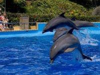 Salto de tres delfines