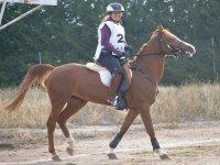 Sobre el caballo en el entrenamiento