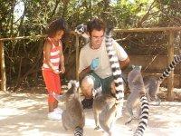 Hora de la comida de los lemures