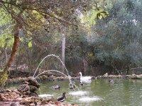 El lago con patos