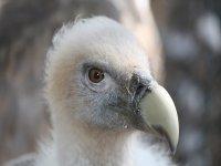 Aves poco conocidas