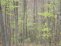 Bosque asturiano