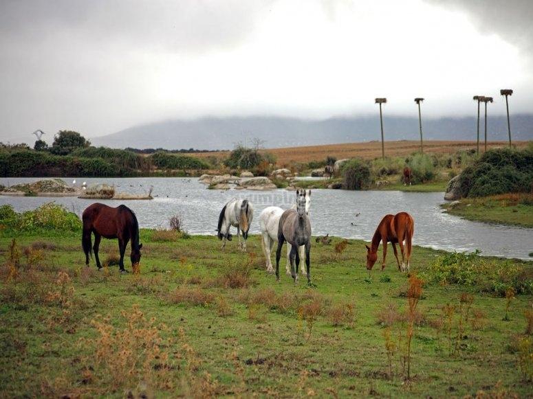 Excursión a caballo por finca