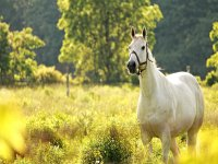 caballo en la hierba