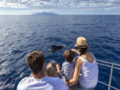 Avistamiento de ballenas y delfines en Tenerife 3h