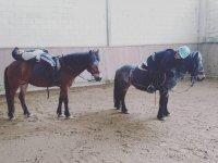 Clase de equitación en poni San Martín de la Vega