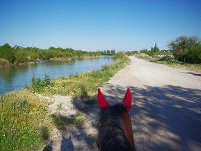 Paseo a caballo por Burgo de Ebro 1 hora