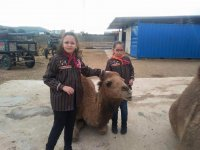 Toma de contacto con el camello