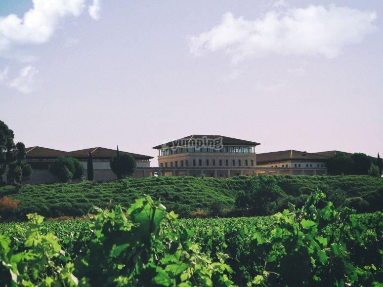葡萄园和酿酒厂