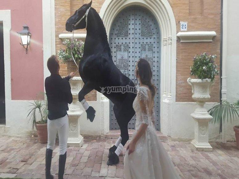 Evento con caballos