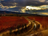 Vineyard in Navarra