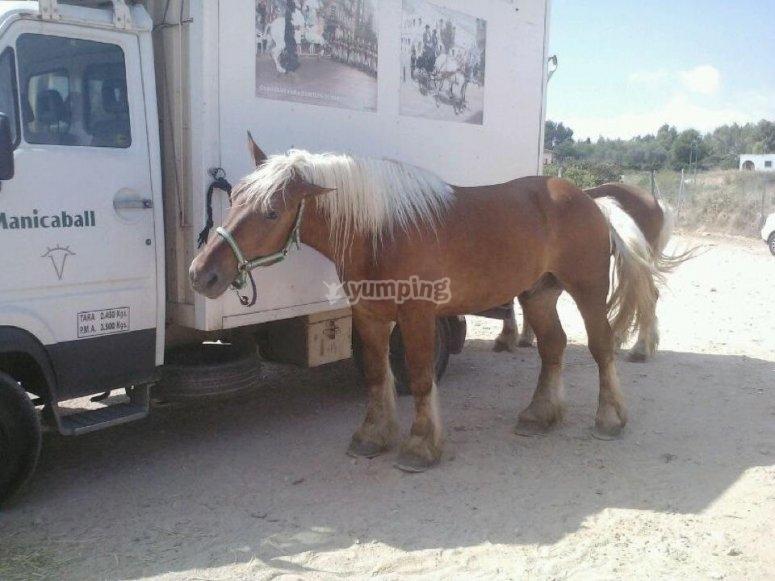 我们的小马匹之一