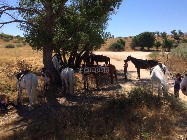 Descanso en la ruta a caballo por El Pardo