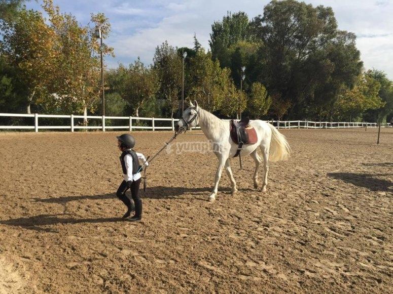 Joven jinete llevando al caballo en pista en Madrid