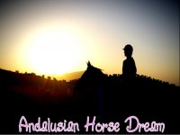 Andalusian Horse Dream