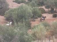 A caballo en el monte