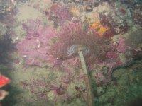 colori caldi sott'acqua
