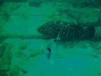 immersione in acque profonde