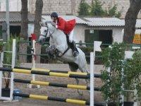 Aprende equitacion con los mejores profesionales