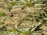 Fauna y flora valenciana