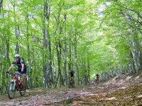 Bosque de Navarra en bici