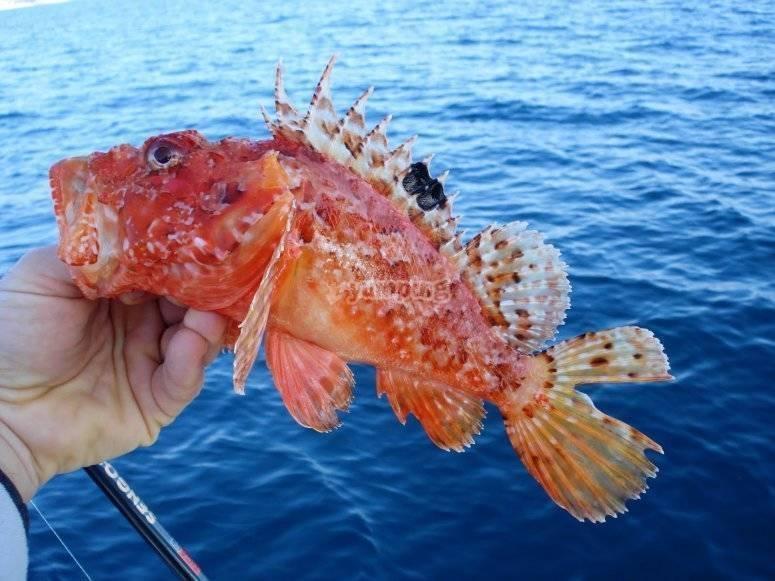 Captura de ejemplares del Mediterraneo