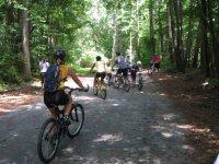骑自行车在松林坡踩下森林游
