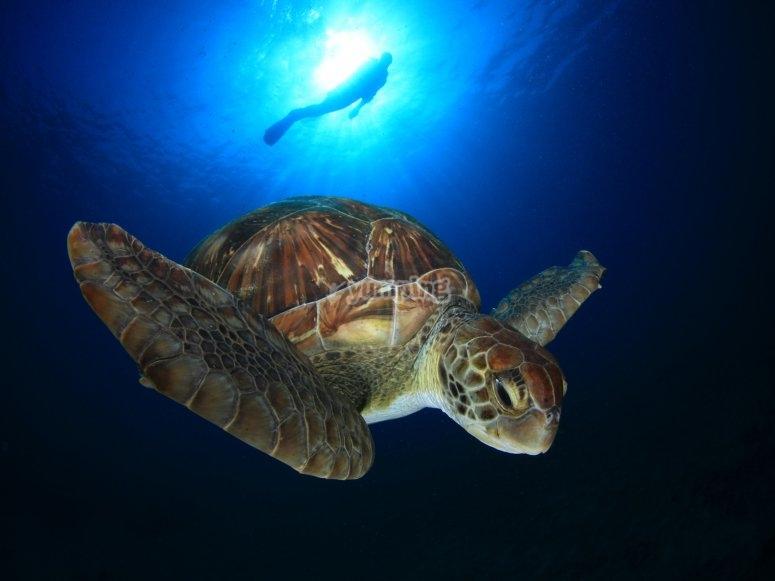 Fauna marina canaria